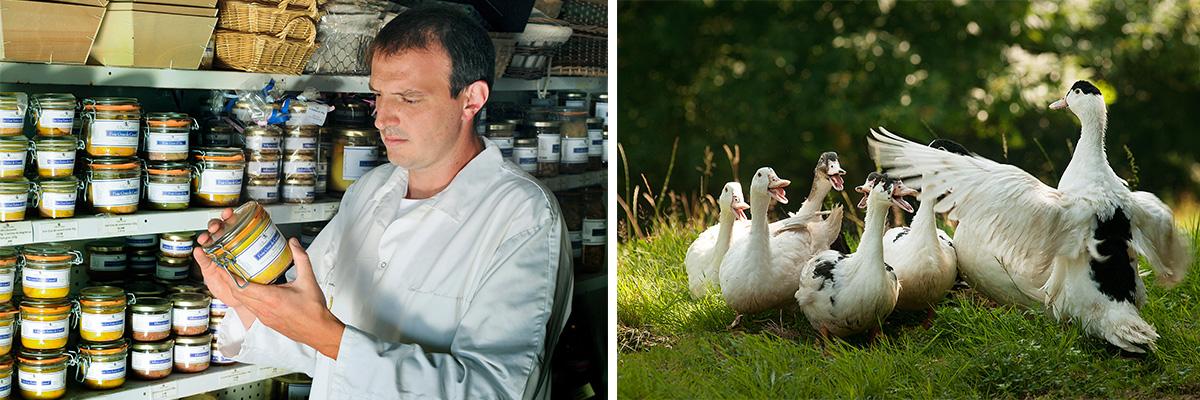 La ferme d'Alban Laban - Producteur de Foie gras de canard - Fabrication de conserves de canard