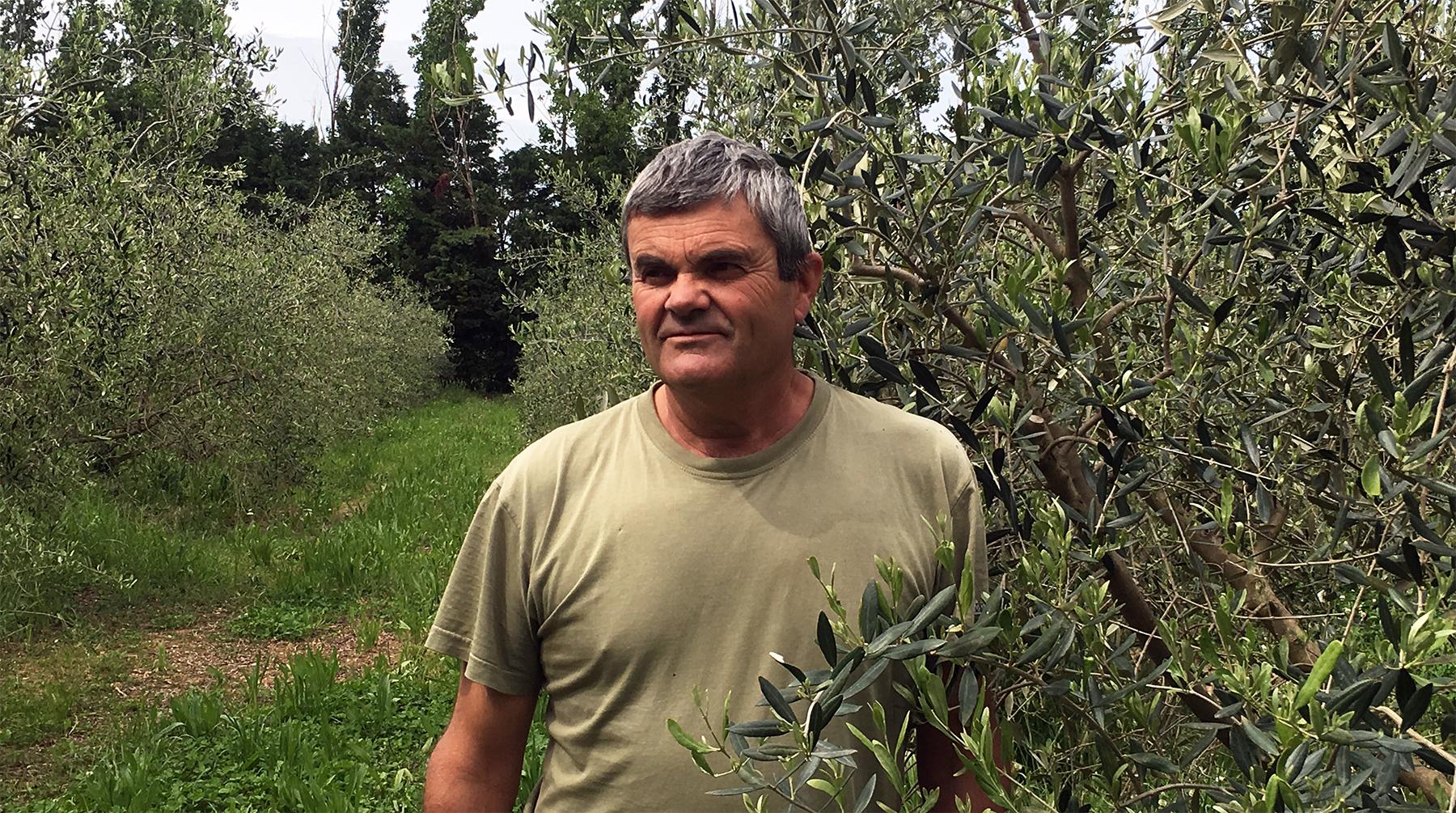 Joël Martin Oliveron - Huile d'olive La Gravienco